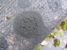 Zwarte Grafkorst (Placynthium nigrum), een typische grafsteenbewoner